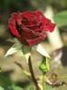 Цветы для Мари